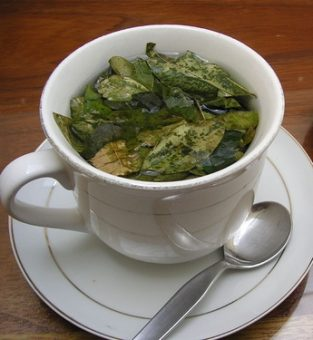 A cup of coca tea made the traditional way using fresh coca leaves